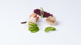 Aloe e piante asciutte Fotografia Stock Libera da Diritti