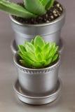 Aloe e succulente di Graptopetalum in pianta in vaso metallica d'argento Fotografia Stock Libera da Diritti