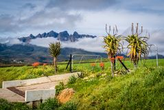 Aloe Entrance in the Cape stock images