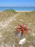 Aloe flower on the desert Royalty Free Stock Image