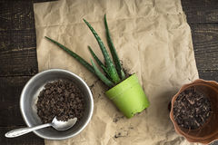 Aloe flower with flower pot on the wooden background horizontal Stock Photography