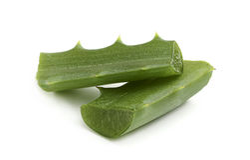 Aloe, foglia fresca. Fotografia Stock Libera da Diritti
