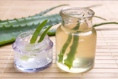 Aloe fresco ed organico vera Immagini Stock Libere da Diritti
