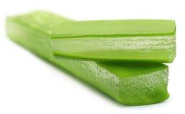 Aloe fresco vera Fotografia Stock