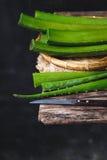 Aloe fresco Vera Immagine Stock Libera da Diritti