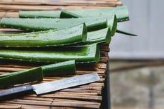 Aloe fresco Vera Immagini Stock Libere da Diritti