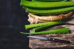 Aloe fresco Vera Fotografia Stock Libera da Diritti