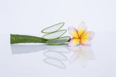 Aloe fresco vera con il fiore di plumeria Fotografia Stock Libera da Diritti