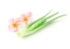 Aloe fresco vera del primo piano con la plumeria su fondo bianco, beaut Immagini Stock Libere da Diritti