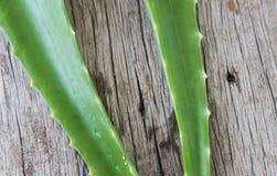 Aloe fresco vera su legno Fotografie Stock