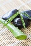 Aloe fresco verde Immagini Stock