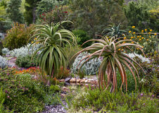 Aloe-Garten Lizenzfreie Stockfotografie