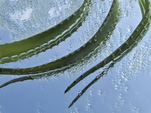 Aloe and green crystals of sea salt. Detail stock images