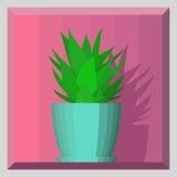 Aloe im Topf auf Volumensegeltuch Stockfotografie