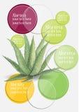 Aloe Inforgraphic σχέδιο watercolor της Βέρα για την αφήγηση των πληροφοριών σας Στοκ φωτογραφία με δικαίωμα ελεύθερης χρήσης