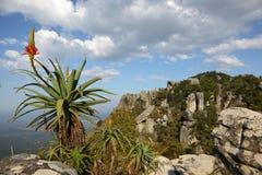 Aloe a Kaapsehoop Fotografia Stock Libera da Diritti