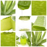 Aloe leaf. Collage of aloe leaf-close up Royalty Free Stock Images