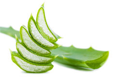 Aloe leaf Royalty Free Stock Image
