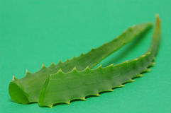 Aloe leafs royalty free stock photography