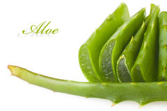 Aloe leaves Royalty Free Stock Photography