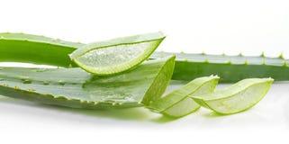 Aloe leaves Stock Image