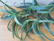 Aloe leaves on the table, to make aloe juice. For good health stock photo