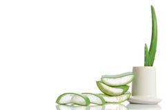 Aloe organico vera Fotografie Stock