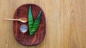 Aloe organico vera, ingrediente per l'officina antinvecchiamento di bellezza, copyspace Fotografia Stock Libera da Diritti