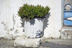 Aloe piantato in vaso che cresce dalla parete bianca in Grecia Immagini Stock