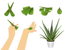 Aloe pieces at different positions Royalty Free Stock Images