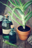 Aloe plant in flowerpot, aloe vera gel and other products. Aloe plant in flowerpot, organic aloe vera gel and other products on wooden table. Herbal medicine Stock Image