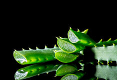 Aloe plant green slice with reflection isolated on a black Stock Photos