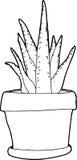 Aloe Plant Outline Stock Photos
