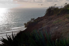 Aloe plant overlooking the ocean. Foreground Aloe plants on a cliff, overlooking the ocean Royalty Free Stock Images