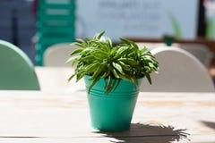Aloe plant on table Stock Photos