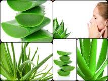 Aloe plant theme collage Stock Photos