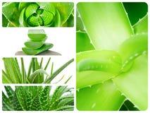 Aloe plant theme collage Royalty Free Stock Photos