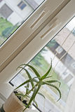 Aloe plant at window Royalty Free Stock Image