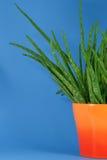 Aloe in POT arancione Fotografia Stock