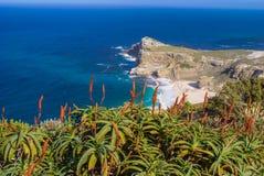 Aloe rosso di fioritura con l'Oceano Atlantico blu profondo nel fondo Fotografia Stock Libera da Diritti