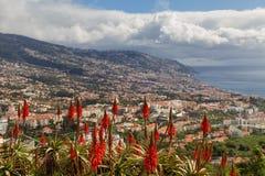 Aloe rosso Vera davanti alla città di Funchal Immagini Stock Libere da Diritti