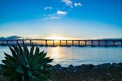 An Aloe and the San Diego Bay Bridge. The sun rises by the San Diego Bay Bridge stock photos