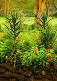Aloe selvatico vera Immagini Stock Libere da Diritti