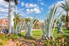 Aloe selvatico Vera in una città Fotografia Stock Libera da Diritti