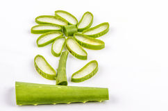 Star il cactus, l'aloe, Aloin, Jafferabad, Barbados (aloe vera (L.) Burm.f.) Immagine Stock