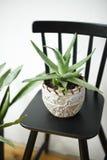 Aloe succulente in vaso su una parete bianca del fondo Decorazione domestica fotografia stock libera da diritti