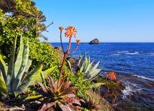 Aloe sulla costa Fotografie Stock