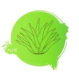 Aloe, tiraggio della mano Fotografia Stock Libera da Diritti