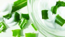 Aloe utile Immagine Stock