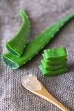 Aloe vera Fotografia Stock Libera da Diritti